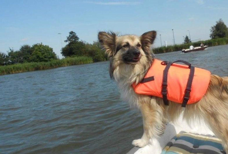 huisdieren-in-de-hitte | AWN Woonboot Makelaar