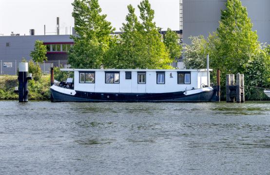 Originele schark in Nijmegen